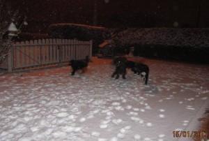Barbet_neige