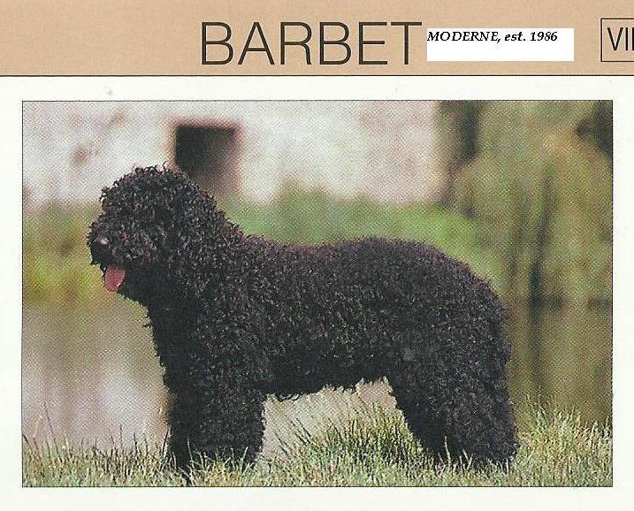 Barbet_moderne2