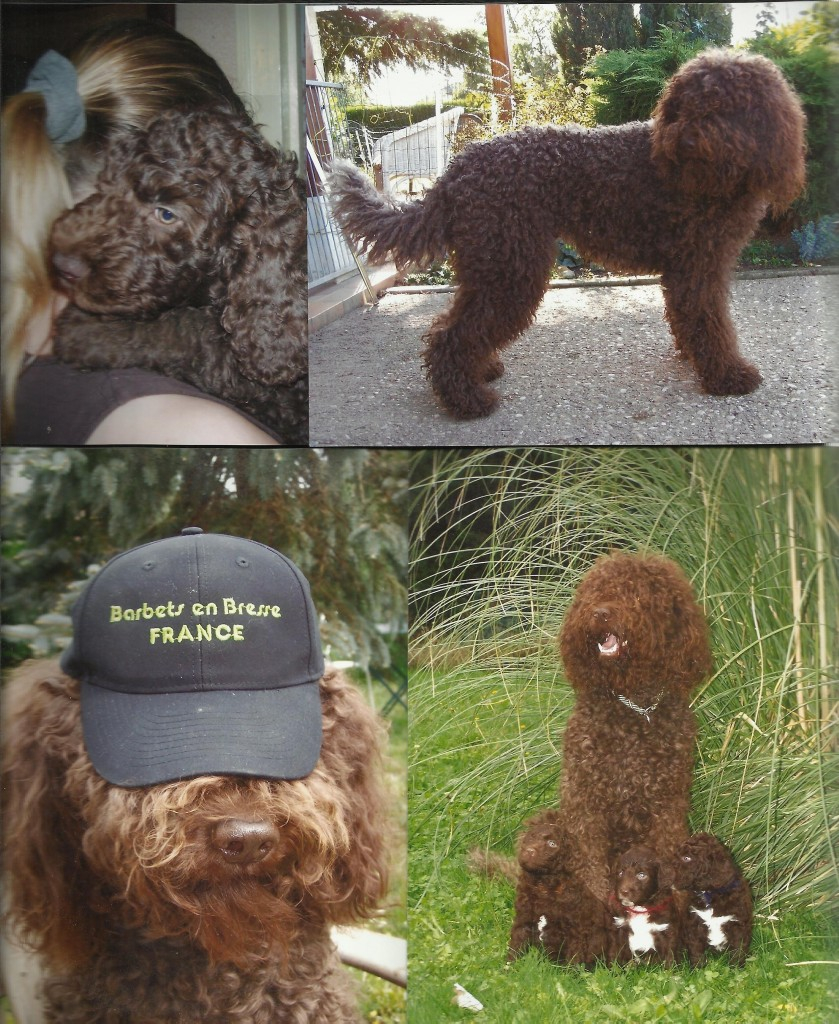 Barbet_BoolyWooly2012