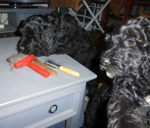 Pups2