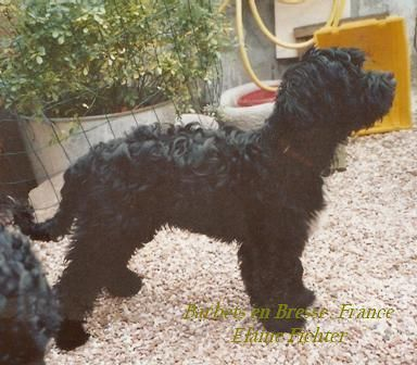 Barbet _coccolina6months