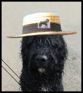 froggy chapeau
