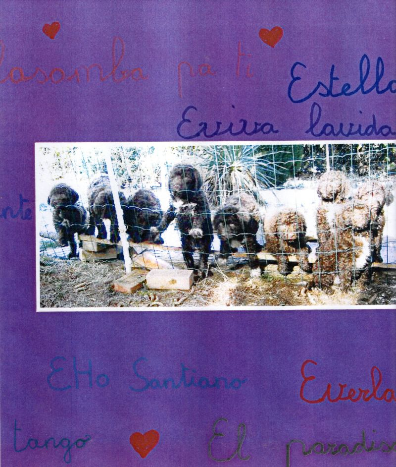 e_litter2009sm