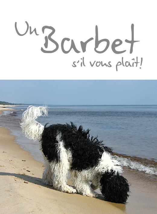 Barbets En Bresse France Only If We Understand Can We Care Only
